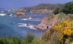 Sea Ranch Coastline